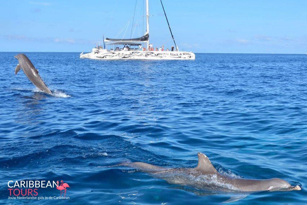 Catamaran Snorkel Tour