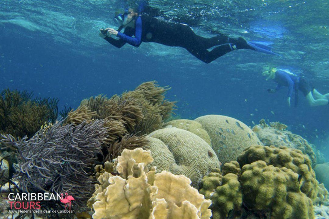Bonaire Snorkel Tour