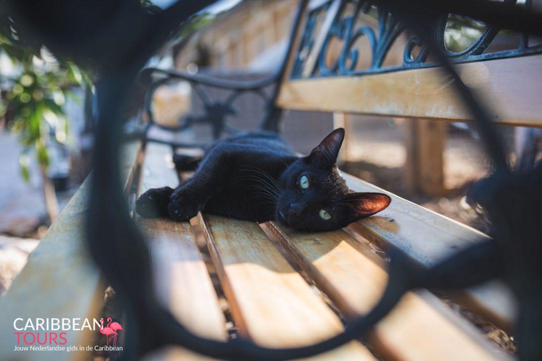 Kattencafé Curacao